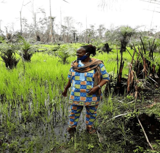 Imperi Chiefdom-Bonthe district gets 30 acre rice farming project